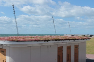 vegetated roofs Western harbour